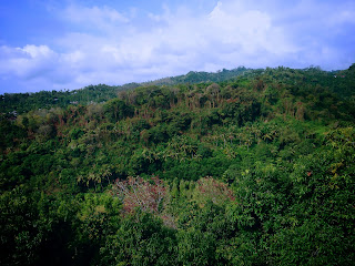 Natural Green Hills Scenery Around The Area Of Brahmavihara Arama Monastery North Bali