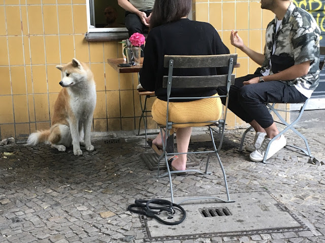 Menschen im Gespräch vor gelber Wand. Ein Hund langweilt sich dabei