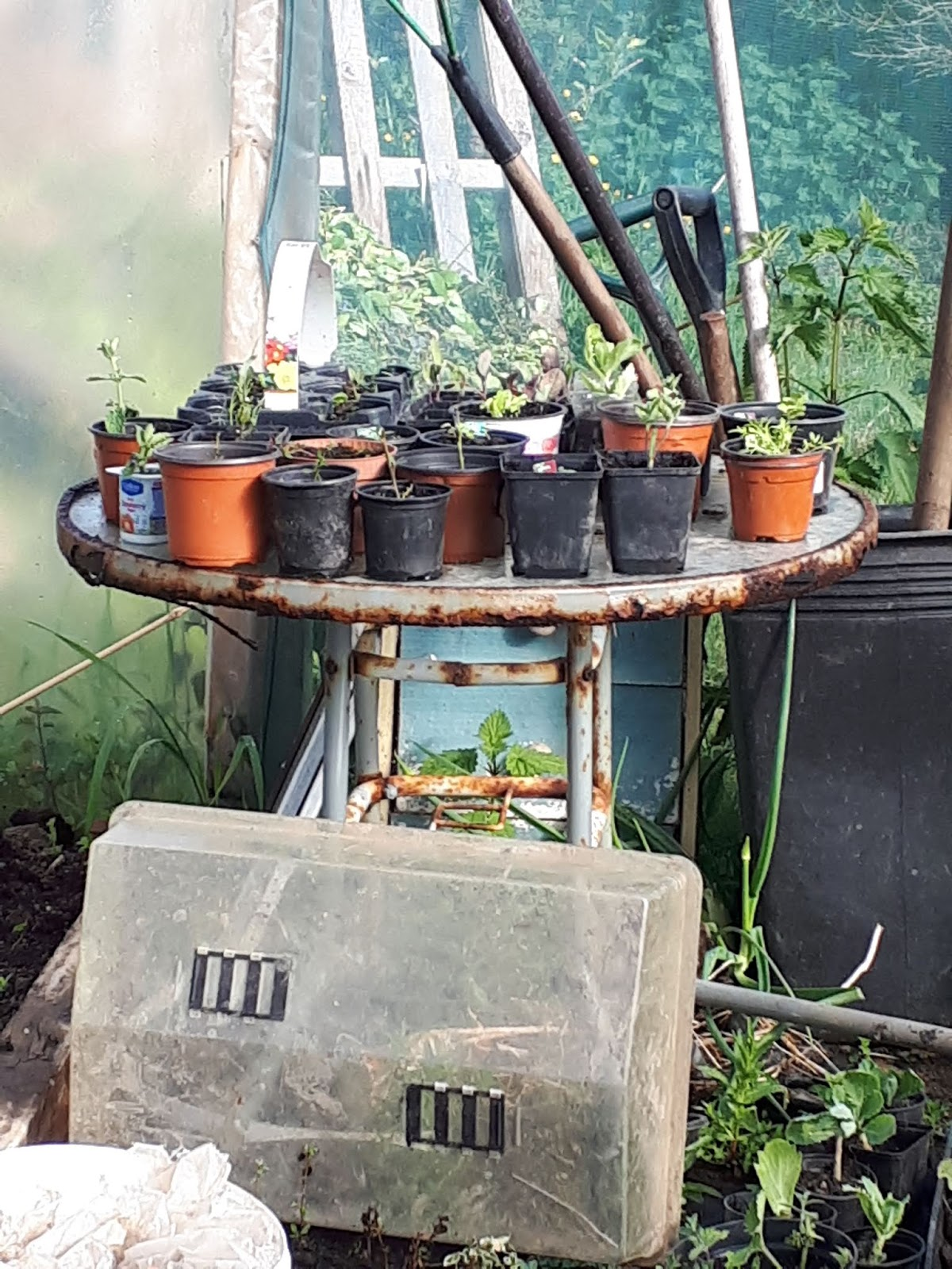 northsider A Recycled Rusty Garden Table And Carrot Wheelbarrow