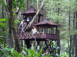 spot selfie di hutan pinus songgon banyuwangi