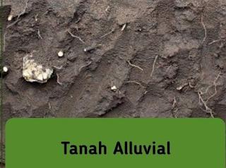 gambar tanah alluvial