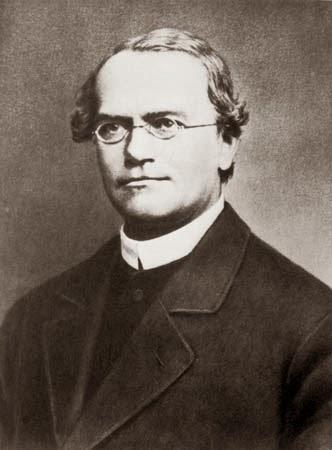Gregor Mendel Titik Tolak Ilmu Genetika Modern