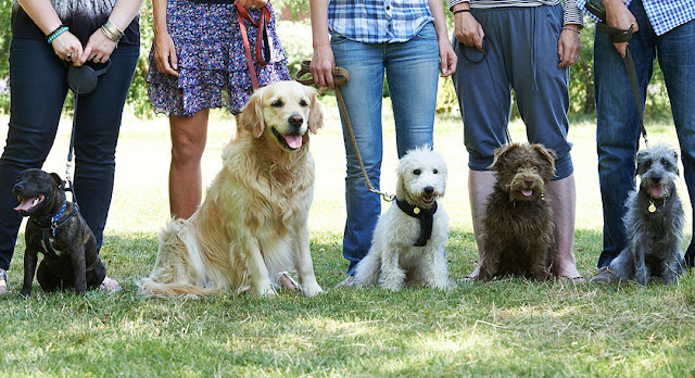 Pawtopia - Dog Agility Training San Diego
