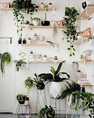 Roślinne półki