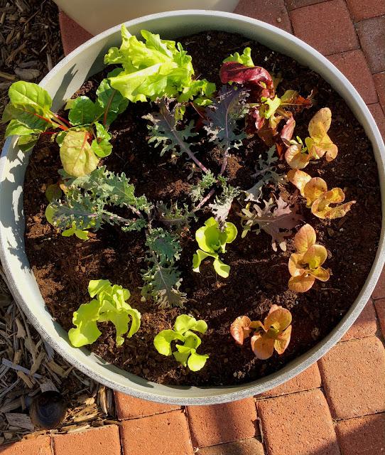lettuce bowl