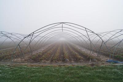Ein Gewächshaus ohne Dach. Darin wachsen noch Pflanzen