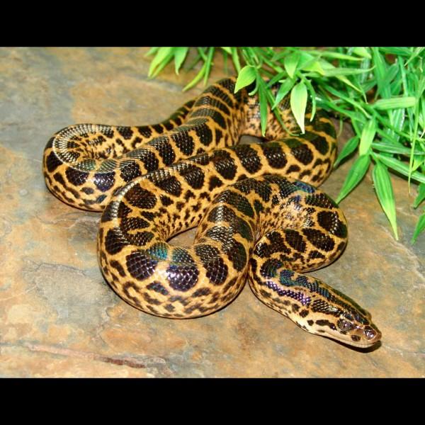 Katy J Negus Ba Hons Cg Arts Amp Animation Study Of Snakes