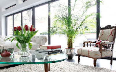 Tanaman Interior yang Akan Menambah Keindahan Kamar Anda