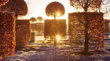 Setos de haya bajo el sol invernal en Broughton Grange