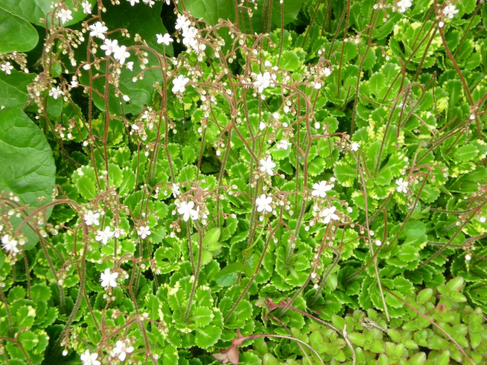 Nancy Jardine Author Nancy Prettya Plant Of Many Names