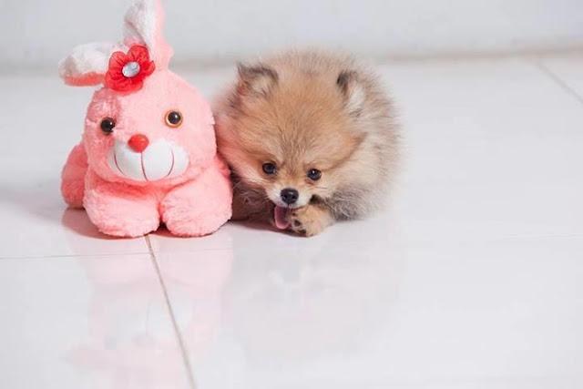 Những loại thuốc tẩy giun hiệu quả cho chó