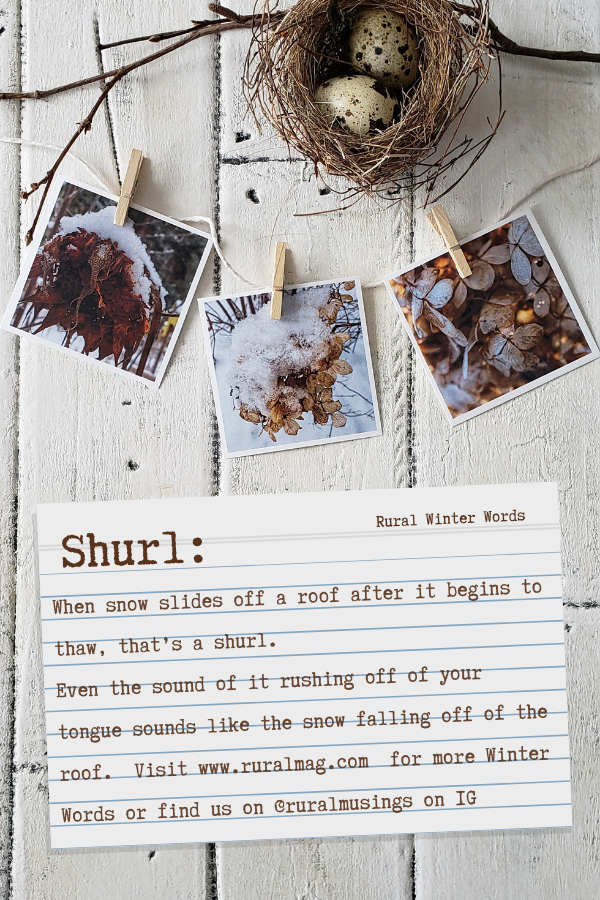White barn board flat lay with birds nest and photos text overlay Shurl Winter words www.ruralmag.com
