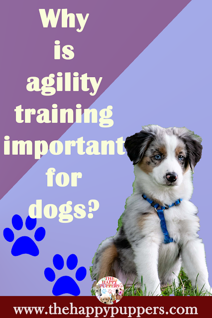Why is agility training important for dogs?