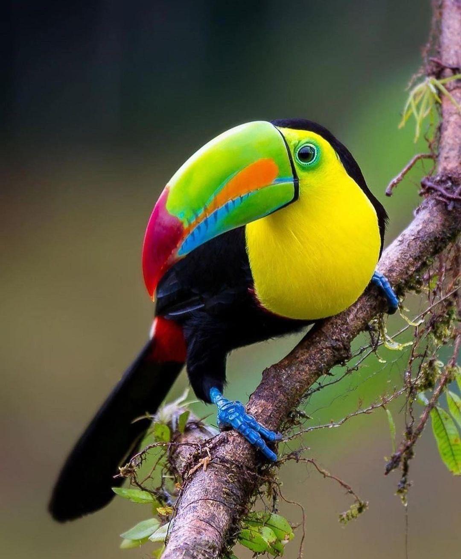 Beautiful Birds DP