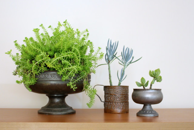 Indoor plants in vintage metal containers