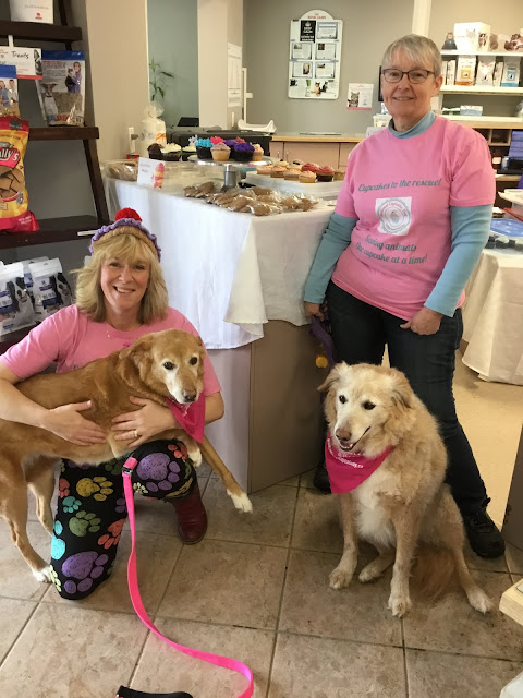 COVID-19 impacts how OSPCA celebrates National Cupcake Day on February 22, 2021