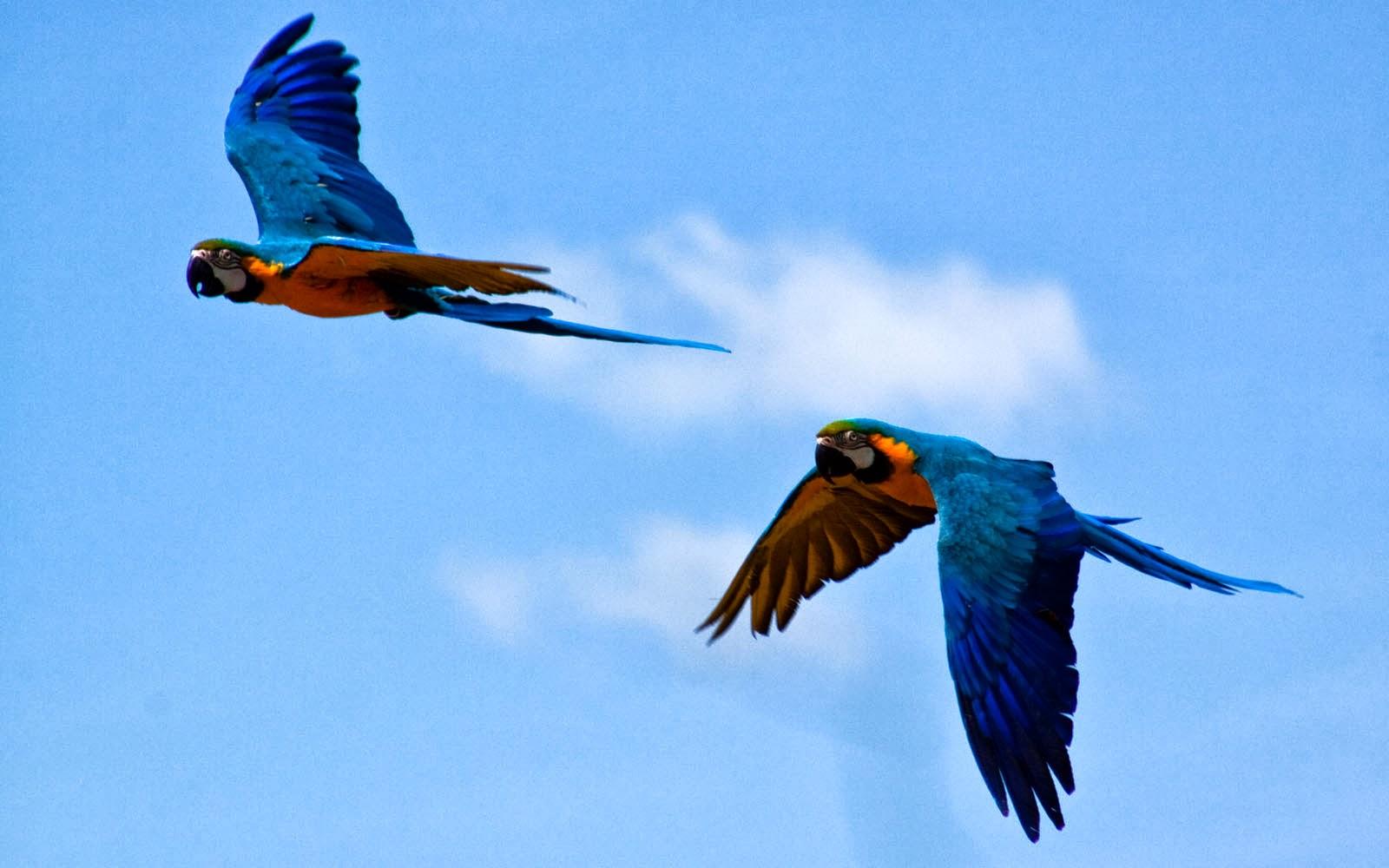 parrots wallpaper bird - photo #36