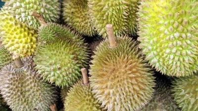 Tips Memilih Durian yang Bagus, Manis, dan sudah Matang
