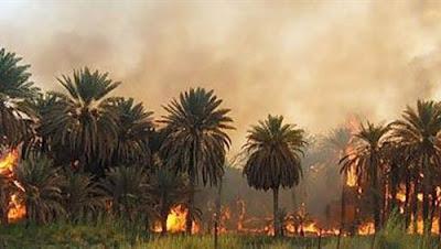 حملة موسى مصطفى موسى عن حريق مزرعة المرشح الرئاسى: ليست عملا إرهابيا