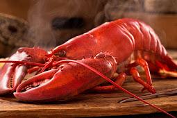 Manfaat Makan Lobster yang Belum Banyak Diketahui