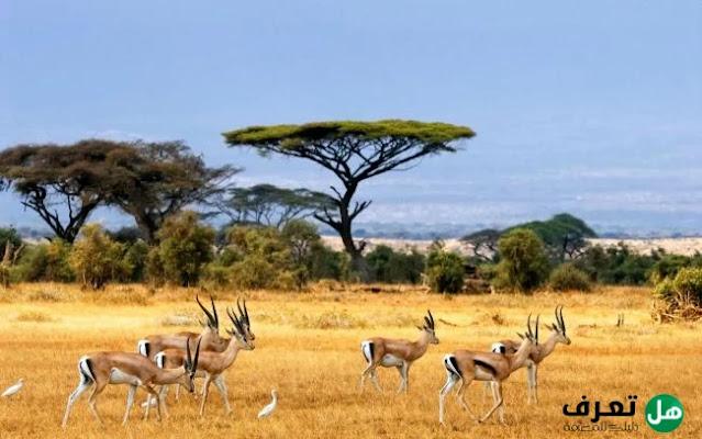 هل تعرف,ما هي غابات السافانا ؟