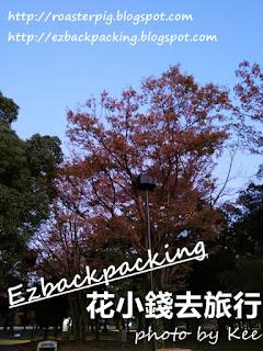 代代木公園紅葉