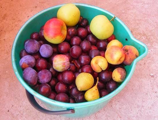 fructe pentru tuica, retete cu fructe, preparate din fructe, fructe bine coapte pentru prepararea sau fabricarea tuicii sau alcoolului de casa, fructe pentru rachiu,