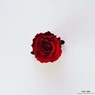 خلفيات ورد احمر جميلة جدا