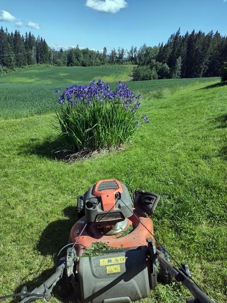 plenklipping iris