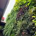 Tukang Vertical Garden Banyuwangi | Jasa Pembuatan Taman Vertikal Murah