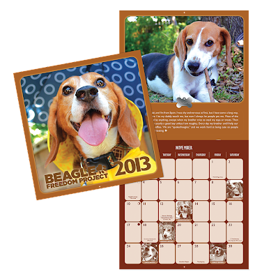 2013 Beagle Freedom Project calendar