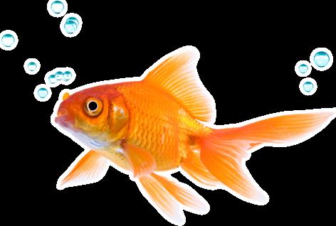 Cómo jugar contra el pez que no dobla nada