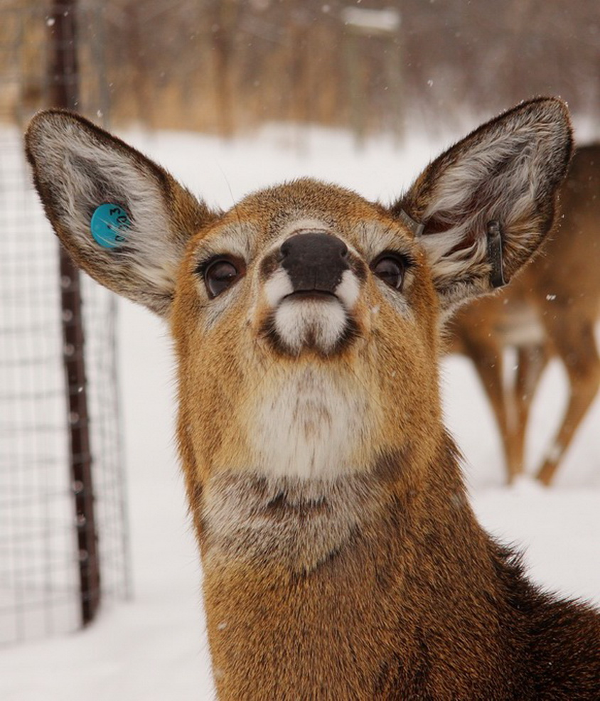 deer funny face water silly mullins madison animal humboldt amherst sour aws till seeds organic diesel pot growing thread lol