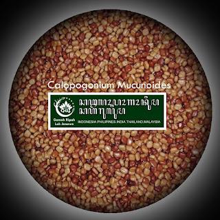 Kacangan CM