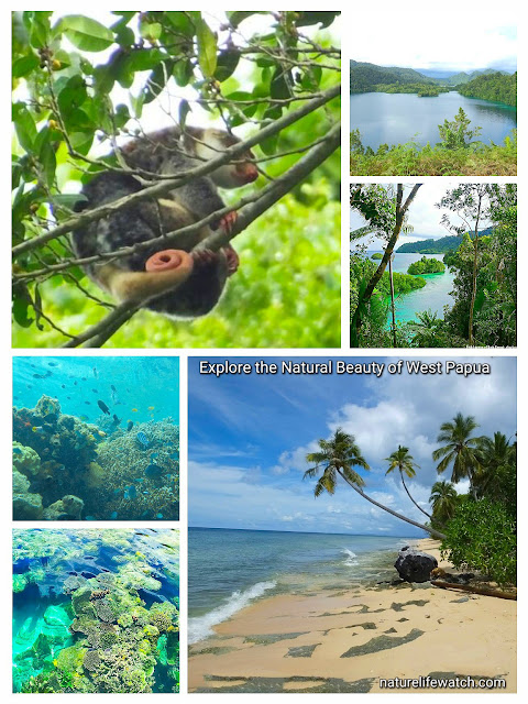 Traveling to Indonesia adventure in Raja Ampat