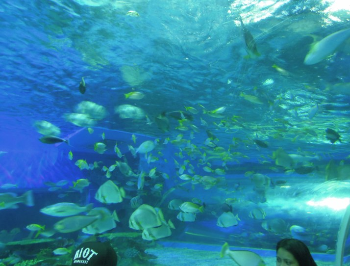 8 Top Things To Do In Manila Ocean Park (A World-Class Oceanarium Experience)