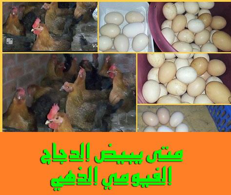 """"""" الدجاج الفيومي الذهبي"""" """"دجاج الفيومي الذهبي"""" """"دجاج فيومي الذهبي"""" """"مواصفات الدجاج الفيومي الذهبي"""" """"الدجاج الفيومي الاصلي"""" """"الفراخ الفيومي الذهبي"""" """"الدجاج الفيومي البياض"""" """"دجاج فيومي ذهبي"""" """"الدجاج الفيومي"""" """"فراخ فيومي ذهبي"""" """"دجاج فيومي ذهبي للبيع"""" """"دجاج تكاً"""" """"دجاج المنتزه الذهبي"""" """"دجاج فيومى"""" """"دجاج منتزه ذهبي"""" """"دجاج فيومي بيور"""" """"دجاج فيومي اصلي"""" """"دجاج فيومي احمر"""" """"مواصفات الدجاج الفيومي"""" """"مواصفات الفراخ الفيومى"""" """"دجاج الفيومي الاصلي"""" """"مواصفات الدجاج الفيومي الاصلي"""" """"الدجاج الفيومى البياض"""" """"اشكال الدجاج الفيومي"""" """"الدجاج الفيومي ويكيبيديا"""" """"الدجاج الفيومى"""" """"دجاج فيومي اصلي للبيع"""" """"الفراخ الفيومي الاصلي"""" """"الفراخ الفيومي عمر يوم"""" """"دجاج الفيومي البياض"""" """"الفراخ الفيومى البياض"""" """"تربية الدجاج الفيومي البياض"""" """"مشروع تربية الدجاج الفيومي البياض"""" """"دجاج فيومي بياض"""" """"دجاج فيومي بياض للبيع"""" """"هل الدجاج الفيومي بياض"""" """"مطلوب دجاج فيومي بياض"""" """"الدجاج الفيومي الهجين"""" """"الدجاج الفيومي المصري"""" """"الدجاج الفيومي الالمنيوم"""" """"الدجاج الفيومي في السودان"""" """"الدجاج الفيومي في الجزائر"""" """"الدجاج الفيومي في الاردن"""" """"الدجاج الفيومي التركي"""" """"الدجاج الفيومي الاحمر"""" """"الدجاج الفيومي الاسود"""" """"الدجاج البلدي الفيومي"""" """"الدجاج الفيومي pdf"""" """"دجاج الفيومي pdf"""" """"معلومات عن الدجاج الفيومي"""" """"فراخ فيومى"""" """"فراخ ذهبية"""" """"فراخ فيومي"""" """"فراخ الفيومي"""" """"دجاج تكاًمسالا"""" """"دجاج تكا مسالا"""" """"دجاج تكا امريكانا"""" """"دجاج تكا تندوري"""" """"دجاج تكا الكويت"""" """"دجاج تكا رقم"""" """"دجاج تكا الطازج"""" """"دجاج تكا منيو"""" """"دجاج تكا ا"""" """"دجاج بيك"""" """"دجاج.كوم"""" """"دجاج كوم"""" """"elmenus دجاج تكا"""" """"دجاج جميزة"""" """"دجاج تكا hotline"""" """"رقم دجاج تكا hotline"""" """"الدجاج اللجهورن"""" """"دجاج ايمانسيه"""" """"دجاج الهبرد"""" """"دجاج تكا menu"""" """"دجاج تكا maadi"""" """"دجاج تكا al maadi"""" """"دجاج تكا short number"""" """"دجاج تكا 6 اكتوبر"""" """"دجاج تكا"""" """"دجاج تكا website"""" """"دجاج المنتزه الفضي"""" """"دجاج منتزه فضي"""" """"دجاج المعمورة"""" """"دجاج فيومى للبيع"""" """"دجاج فيومي المنيوم"""" """"دجاج فيومي تركي"""" """"دجاج فيومي قولد"""" """"دجاج فيومي للبيع في مصر"""" """"دجاج فيومي للبيع في تونس"""" """"دجاج بوفانز"""" """"ouedkniss دجاج فيومي"""""""