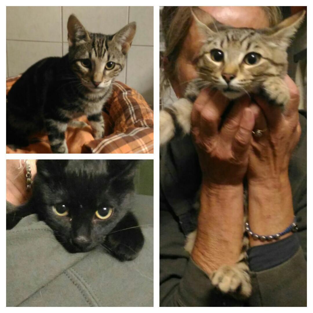 Immagini di gattini e cagnolini for Youtube cani e gatti