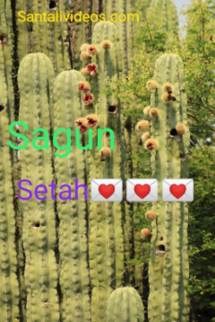 santali good morning