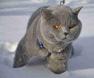 obat kutu kucing paling ampuh Yang Perlu Di coba