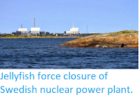 https://sciencythoughts.blogspot.com/2013/10/jellyfish-force-closure-of-swedish.html