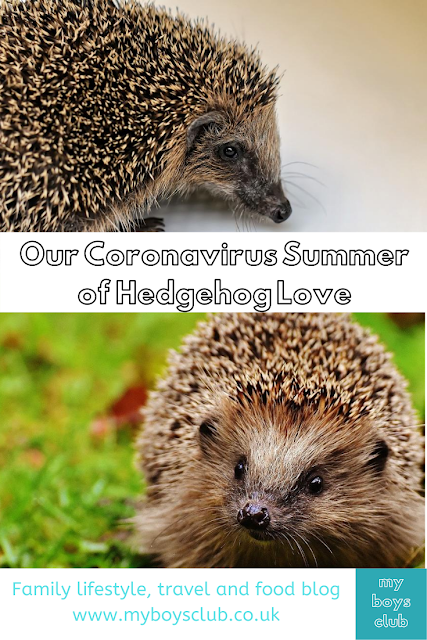 coronavirus hedgehogs