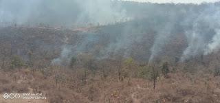 वन विभाग में वनों को आग से बचाने नहीं मिला बजट