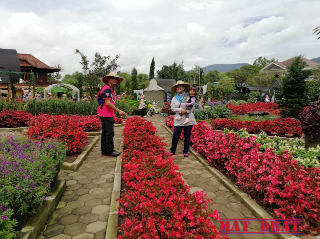 Bercuti Bandung Kebun Begonia Lembang