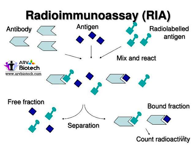 Radioimmunoassay  (RIA), http://www.arvbiotech.com
