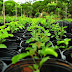 DF ganhará 111,2 mil árvores a partir de novembro, decisão faz parte do Programa de Arborização