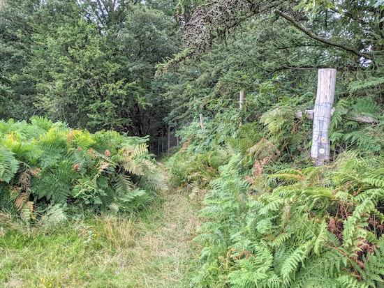 Knebworth footpath 24 heading into woodland
