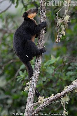 tree kangaroo world