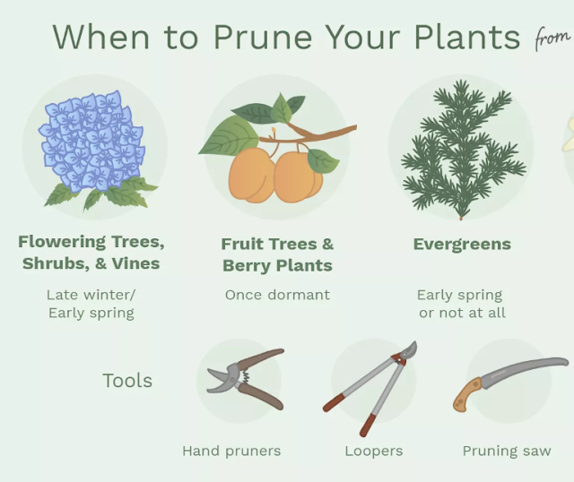 Basic Gardening: How to Prune Trees and Plants