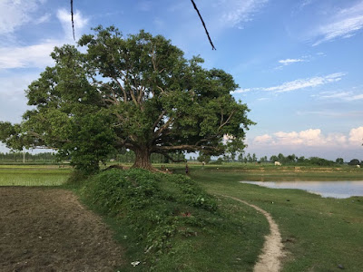 we should not sleep under a peepal tree